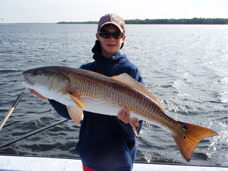 Redfish in tampa bay cast away charters for Tampa bay fish